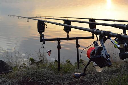 reel, fishing, rod, fish