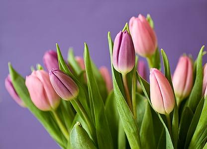 Tulipani, fiori, Mazzo del tulipano, viola, rosa, natura, pianta