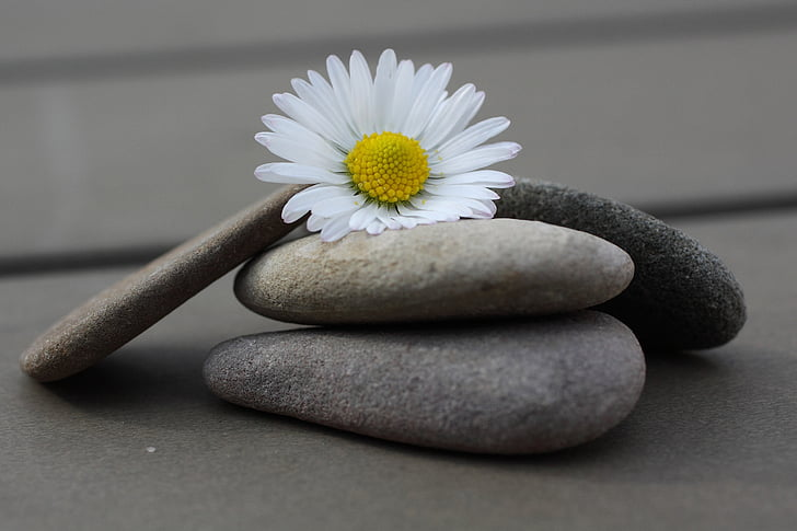 stones, daisy, close, flower, pebble, stone - Object, nature