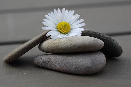 pedres, Margarida, tancar, flor, còdols, pedra - objecte, natura
