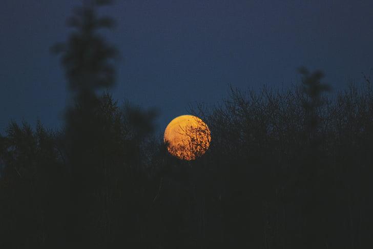 concepció artística, Lluna, sol, planta, el paisatge