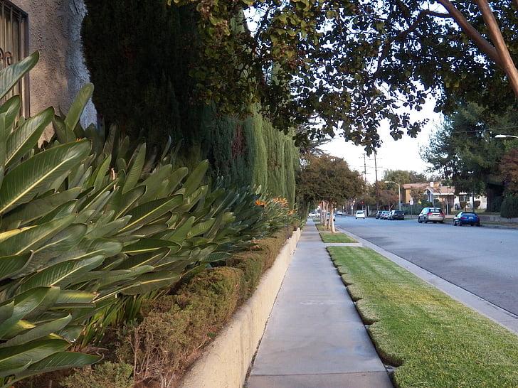 camí, carretera, viatge, plantes tropicals