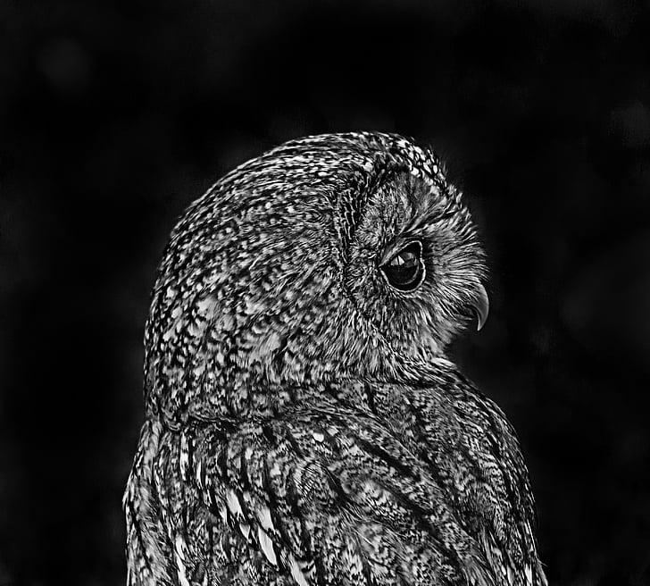 owl, black, white, bird, nature, art, background