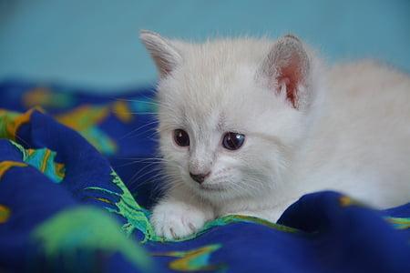 kitten cat, petit, feline, cute, animal, kitten, cute kitten