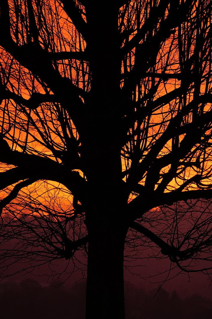 부족, 로그, 분기, 일몰, 트리, 미적, 고독한 나무