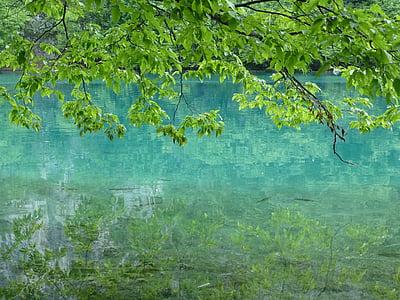 llacs de Plitvice, Croàcia, l'aigua, natura, paisatge, Llac, peix