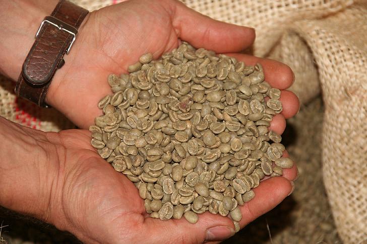 kaffe, kaffebønner, bønner, Café, aroma, grøn kaffe, hånd