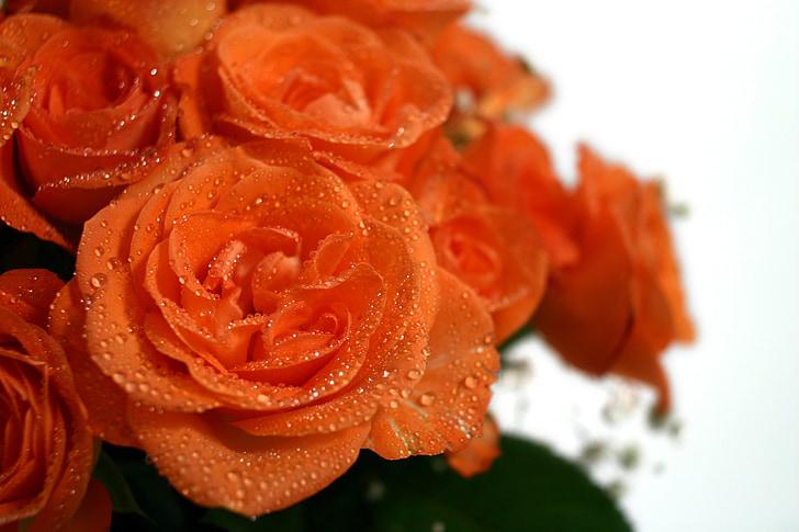 Rosas, ramo de la, boda, Strauss, Felicitaciones, ramo de rosas