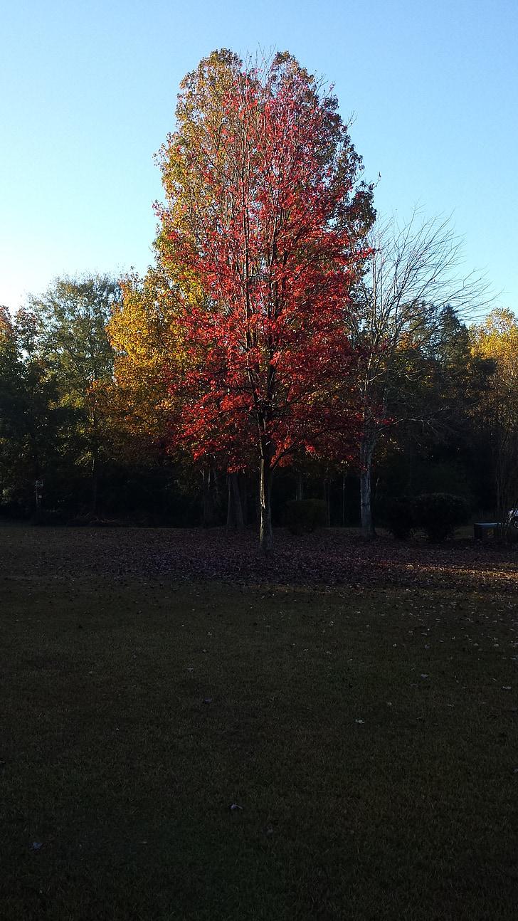 tardor, colors, taronja, vermell, arbre, vibrants, natura