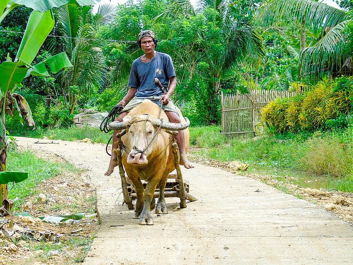farmer, ride, farm, agriculture, animal, outdoor, asia
