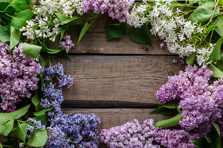 background, lilac, flowers, postcard, purple, spring, plant