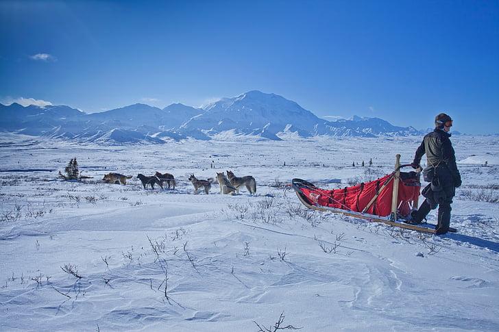 trineu de gossos, neu, desert, muntanyes, Parc Nacional de Denali, preservar, Alaska