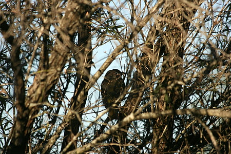 bird, branches, outdoors, branch, nature, tree branches, brown