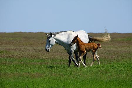 con ngựa, con voi con, Mare, động vật có vú, động vật, Thiên nhiên, ngựa