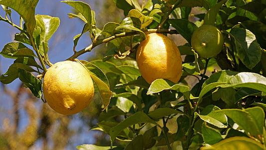 llimones, llimoner, cítrics, fruita, Agra, vitamines, madures