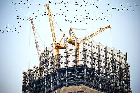ocells, edifici, construcció, grues, ramat