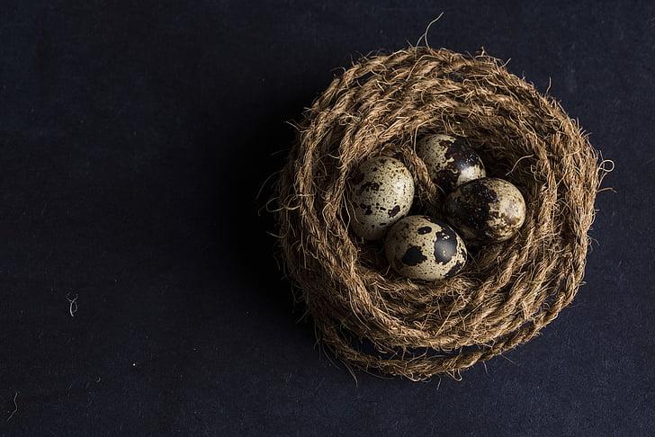 art, close-up, color, eggs, food, little, quail eggs