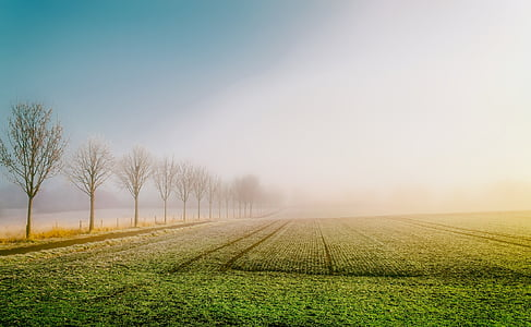 sunrise, dawn, germany, field, agriculture, farm, trees