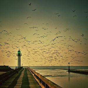 ฝูง, เงา, นก, มีเที่ยวบิน, ประภาคาร, ตะวันทอแสง, พระอาทิตย์ตก