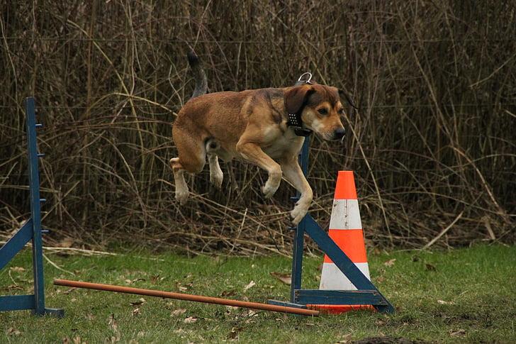 cão, salto, exercício, exercício de cão, Agile, área de exercício de treinamento de cão