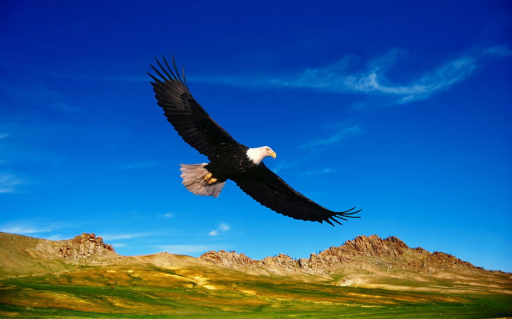 Prairie, thảo nguyên, dãy núi, thảm thực vật, Thiên nhiên, chim, bay