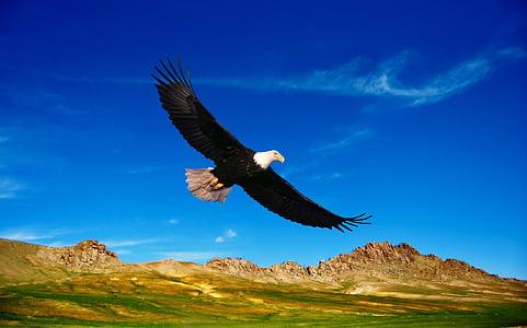 Prairie, Steppen, Berge, Vegetation, Natur, Vögel, fliegen