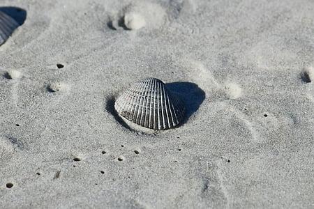 sorra, closca, platja, closca, Costa, Costa, Mar