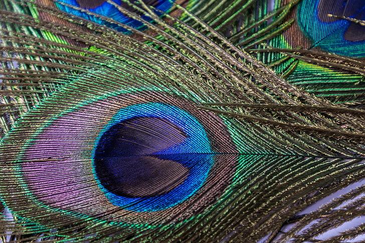Резултат слика за paunovo pero