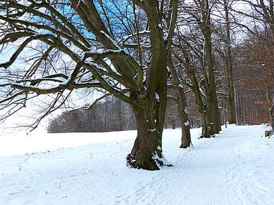 tree, avenue, snow, snowy, winter, cold, field