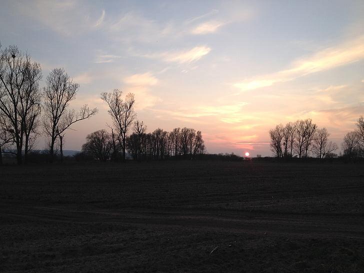 НД, орним, поле, краєвид, Сільське господарство, Природа, дерево