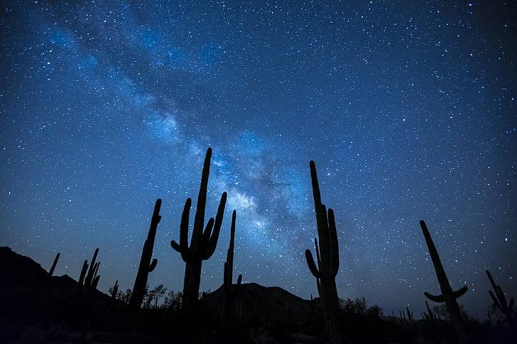 Melkweg, sterren, nacht, hemel, landschap, woestijn, Cactus