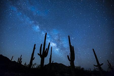 Via Làctia, estrelles, nit, cel, paisatge, desert de, cactus