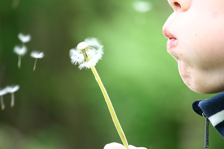 dandelion, blowing, childhood, kid, summer