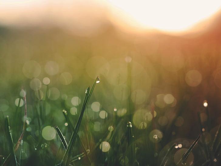Rosy, tráva, vlhkosť, Príroda, mokré