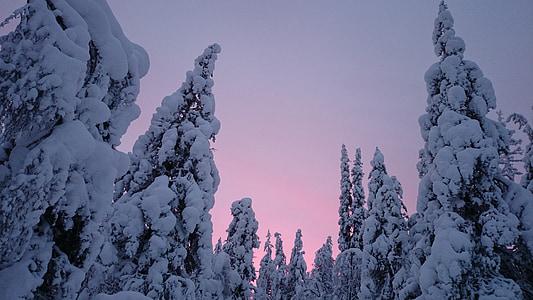 sunset, snow, winter, lapland, finland, trees, nature