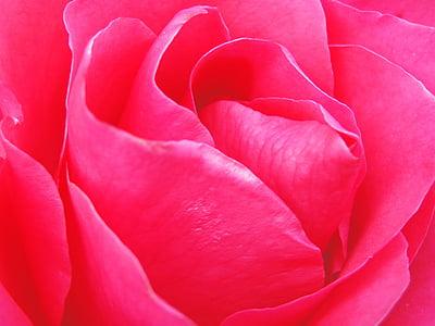 Tapeta, pozadie, ruže, kvety, kvet, Príroda, grafika
