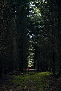 bosc, molsa, verd, clar, natura, primavera, arbre