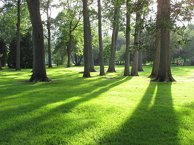 paisatge d'estiu, paisatge, natura, verd, herba, llum del sol, paisatge