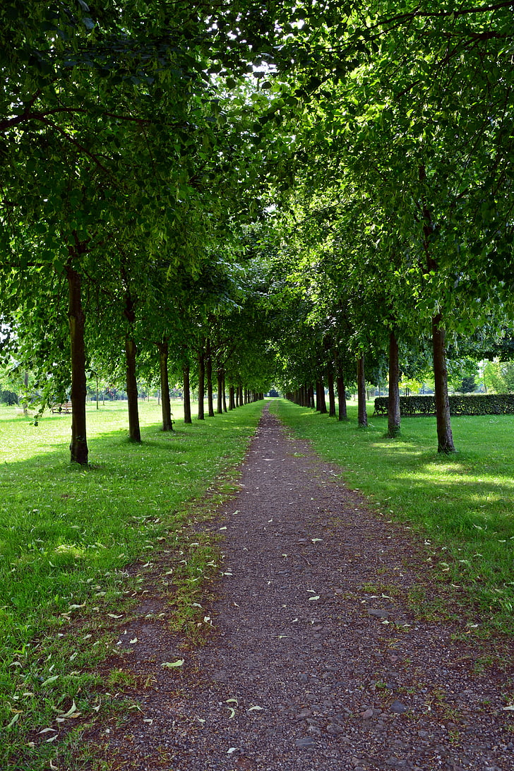 park, avenue, walk, trees, tree lined avenue, green