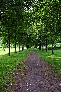 Park, Avenue, chôdze, stromy, strom linajkované avenue, Zelená
