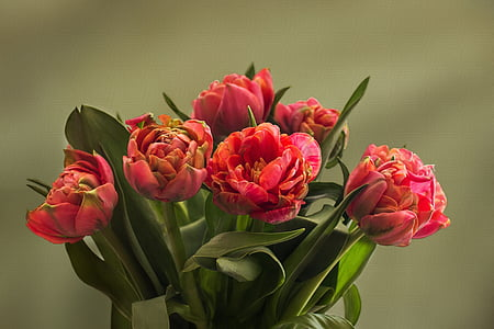 Tulipani, Riempite i tulipani, primavera, trama, fiore, tulipano, natura