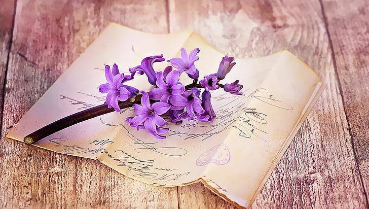 Surat, lama, antik, font, tulisan tangan, bunga, eceng gondok