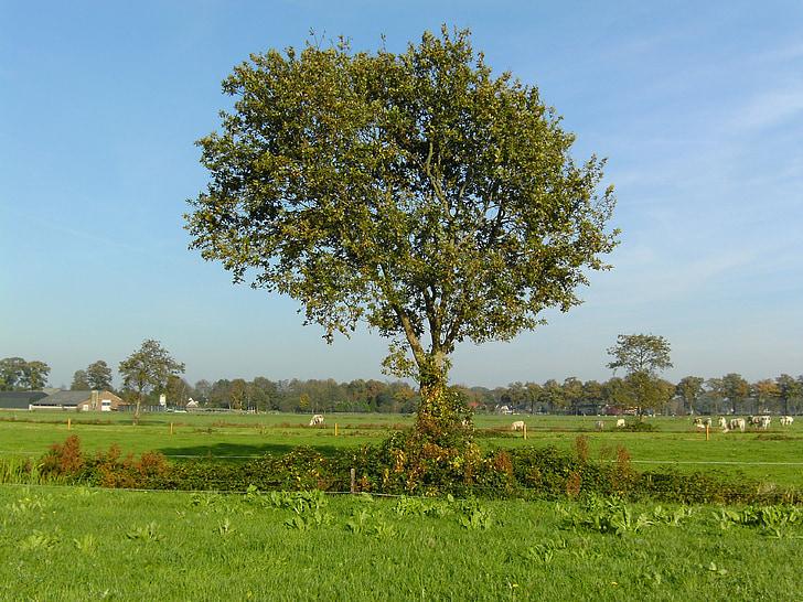 arbre, les pastures, natura