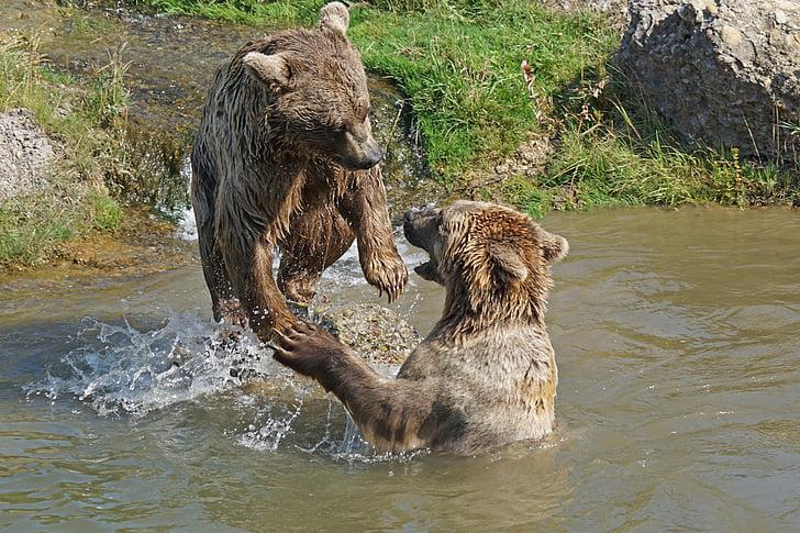 Björn, lekfull, vatten