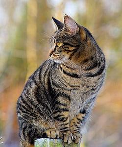 котка, женски, Адидас, кожа, скумрия, Гледай, повишени