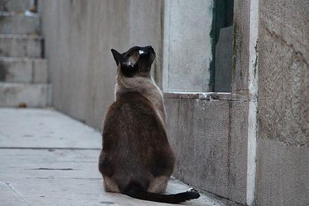 cat, waiting, domestic cat, alley