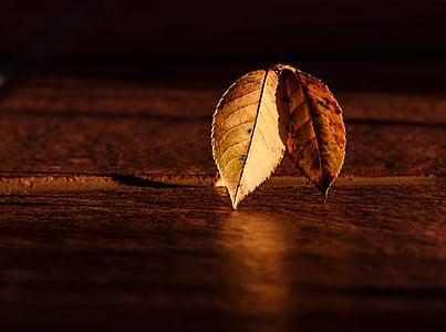 lehed, Sügis, Dawn, kuldne tund, hele ja tume, abstraktne, valgus