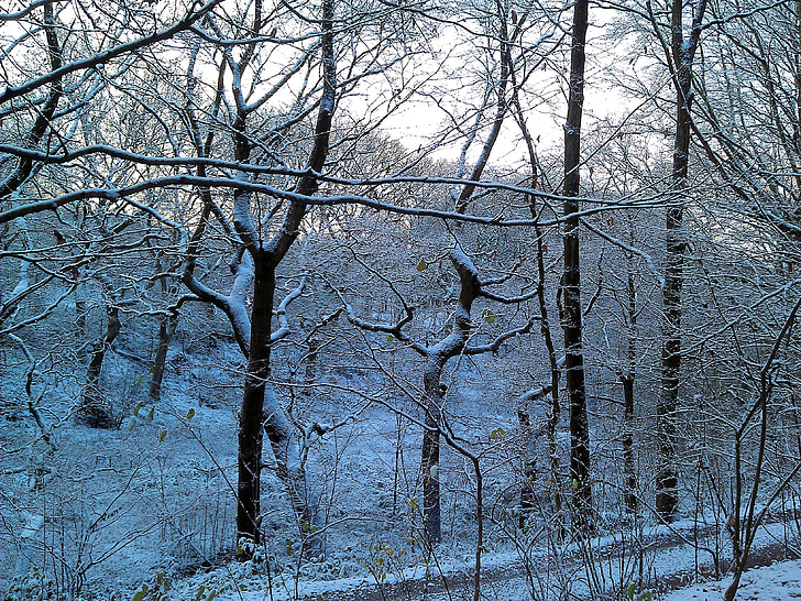 winter, forest, fairytale landscape, tree, nature, snow, winter tree