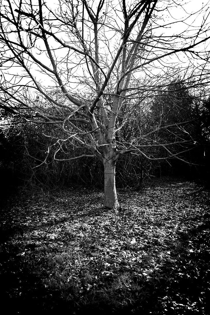 žiemą, medis, Estetinis, filialai, Kahl, kvėpuoti