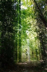 rider, forest, light, mystic, forest road, trees, nature
